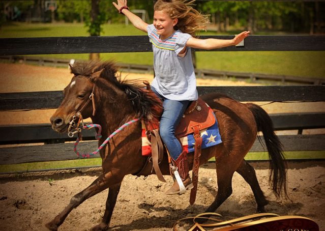 005-Punchy-Bay-Pony-Gelding-For-Sale-Kids-Bombproof