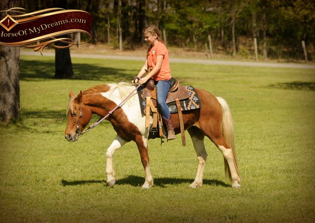 005-Sarah-Lou-Paint-Pony-Mare-For-Sale