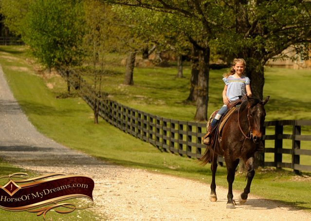 006-Jazz-Bay-Roan-AQHA-Gelding-For-Sale