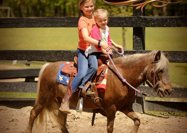 006-Peppermint-Chocolate-Palomino-kids-Pony-Mare-For-Sale