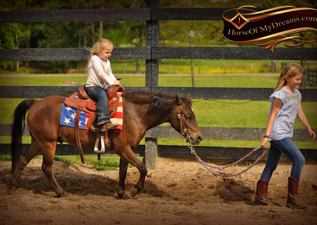 006-Punchy-Bay-Pony-Gelding-For-Sale-Kids-Bombproof