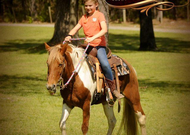 006-Sarah-Lou-Paint-Pony-Mare-For-Sale