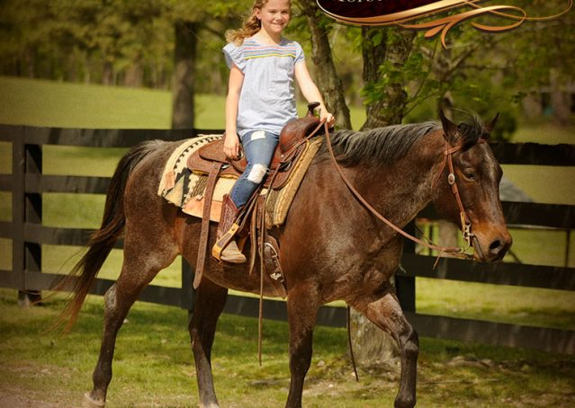 007-Jazz-Bay-Roan-AQHA-Gelding-For-Sale