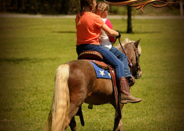 007-Peppermint-Chocolate-Palomino-kids-Pony-Mare-For-Sale