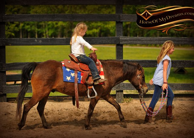007-Punchy-Bay-Pony-Gelding-For-Sale-Kids-Bombproof