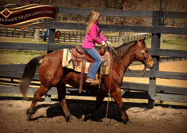 007-Wagner-Bay-AQHA-Gelding-For-Sale