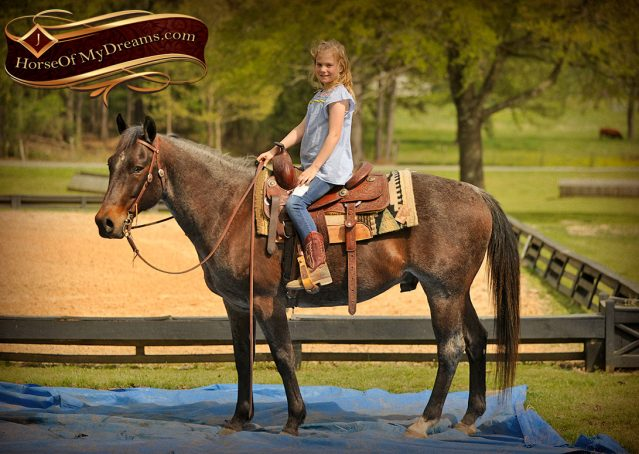 008-Jazz-Bay-Roan-AQHA-Gelding-For-Sale