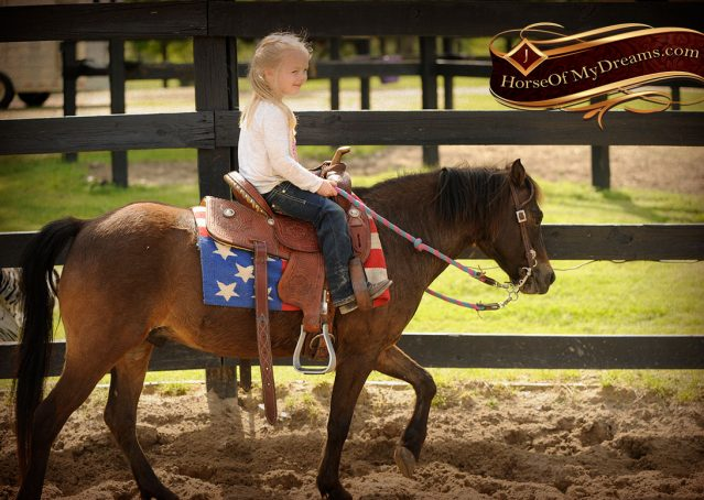 008-Punchy-Bay-Pony-Gelding-For-Sale-Kids-Bombproof