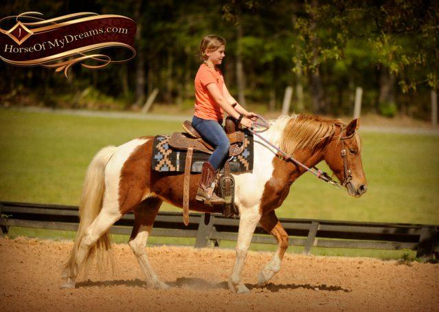008-Sarah-Lou-Paint-Pony-Mare-For-Sale