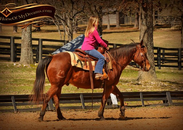 008-Wagner-Bay-AQHA-Gelding-For-Sale