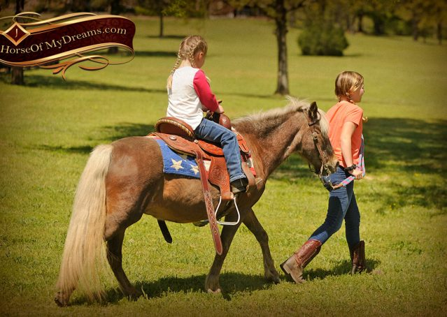 009-Peppermint-Chocolate-Palomino-kids-Pony-Mare-For-Sale