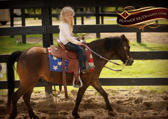 009-Punchy-Bay-Pony-Gelding-For-Sale-Kids-Bombproof