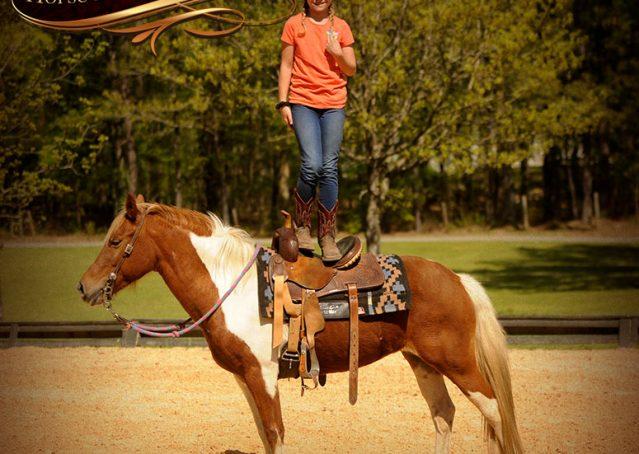 009-Sarah-Lou-Paint-Pony-Mare-For-Sale