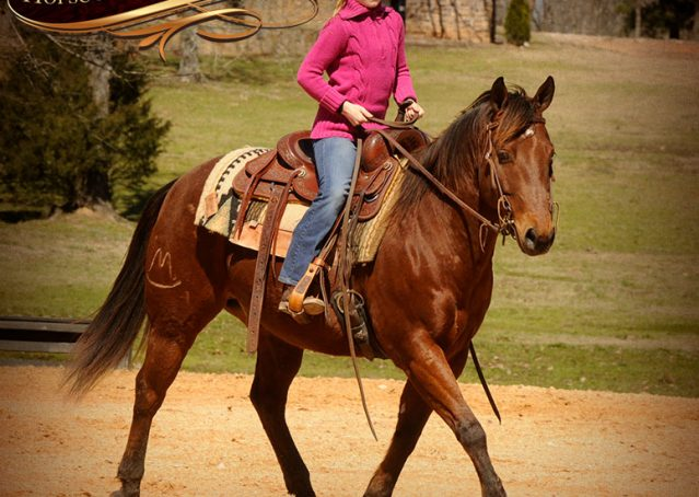 009-Wagner-Bay-AQHA-Gelding-For-Sale