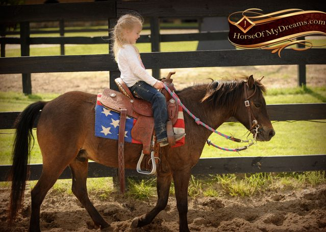 010-Punchy-Bay-Pony-Gelding-For-Sale-Kids-Bombproof