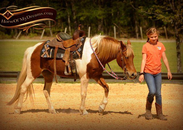 010-Sarah-Lou-Paint-Pony-Mare-For-Sale