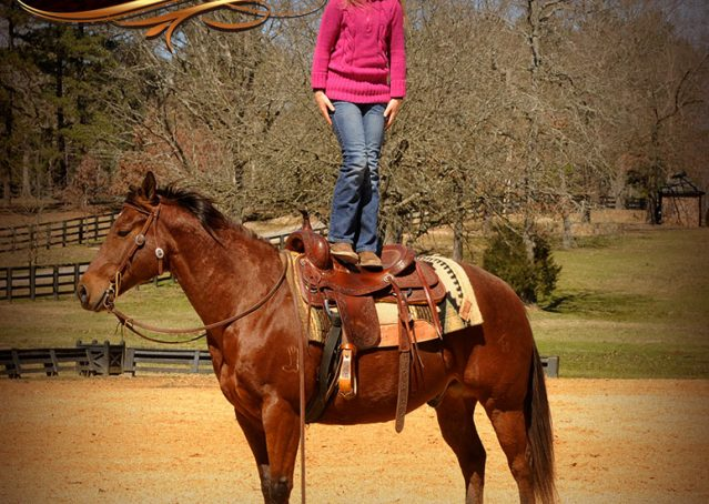 010-Wagner-Bay-AQHA-Gelding-For-Sale