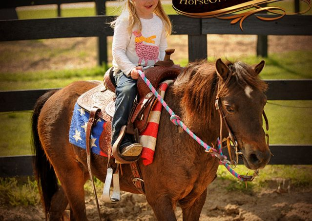 011-Punchy-Bay-Pony-Gelding-For-Sale-Kids-Bombproof