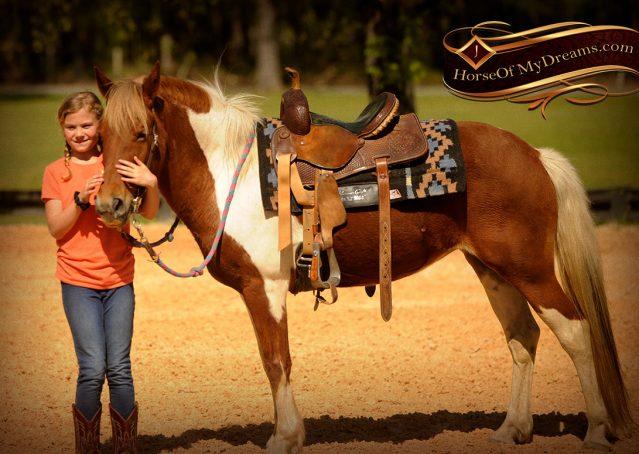 011-Sarah-Lou-Paint-Pony-Mare-For-Sale
