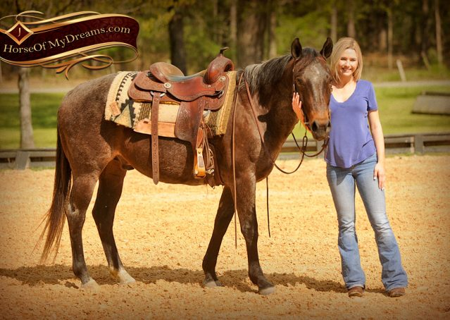 012-Jazz-Bay-Roan-AQHA-Gelding-For-Sale