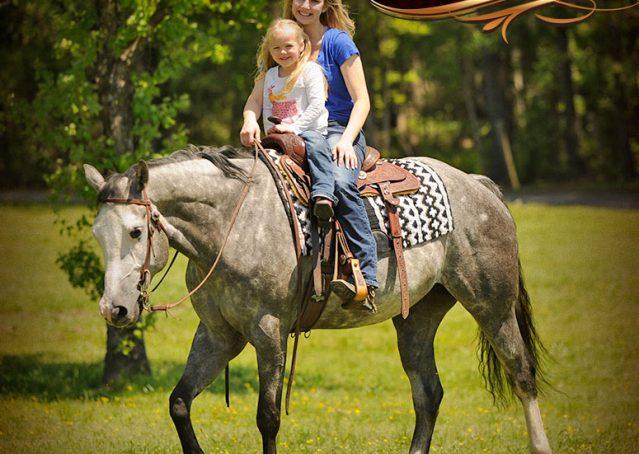 013-Berkley-Gray-Grey-AQHA-Quarter-Horse-Gelding-For-Sale