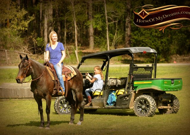 013-Jazz-Bay-Roan-AQHA-Gelding-For-Sale