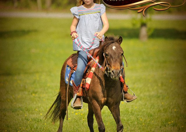 013-Punchy-Bay-Pony-Gelding-For-Sale-Kids-Bombproof
