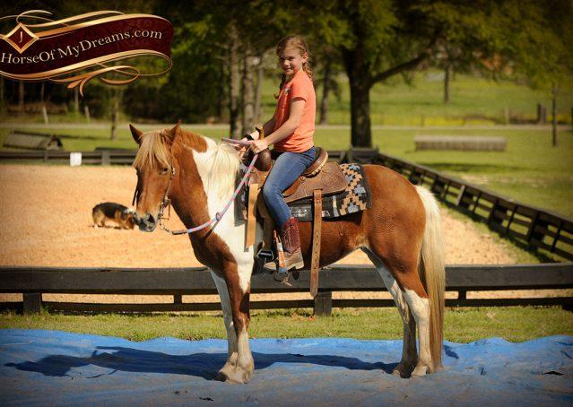 013-Sarah-Lou-Paint-Pony-Mare-For-Sale