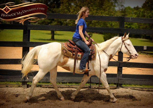 014-Dancer-APHA-Gelding-For-Sale