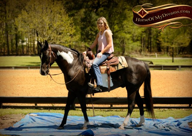 014-Domino-Black-White-Paint-Gelding-For-Sale