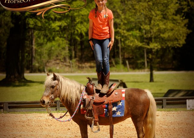 014-Peppermint-Chocolate-Palomino-kids-Pony-Mare-For-Sale