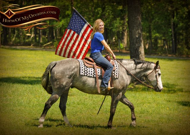 015-Berkley-Gray-Grey-AQHA-Quarter-Horse-Gelding-For-Sale