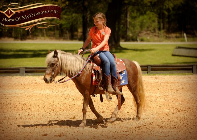 015-Peppermint-Chocolate-Palomino-kids-Pony-Mare-For-Sale