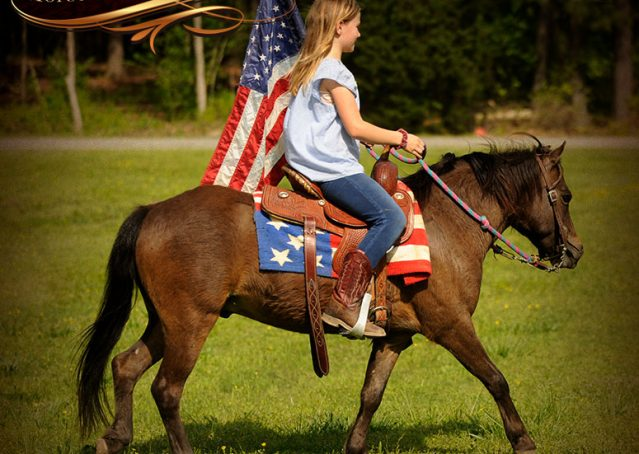 015-Punchy-Bay-Pony-Gelding-For-Sale-Kids-Bombproof
