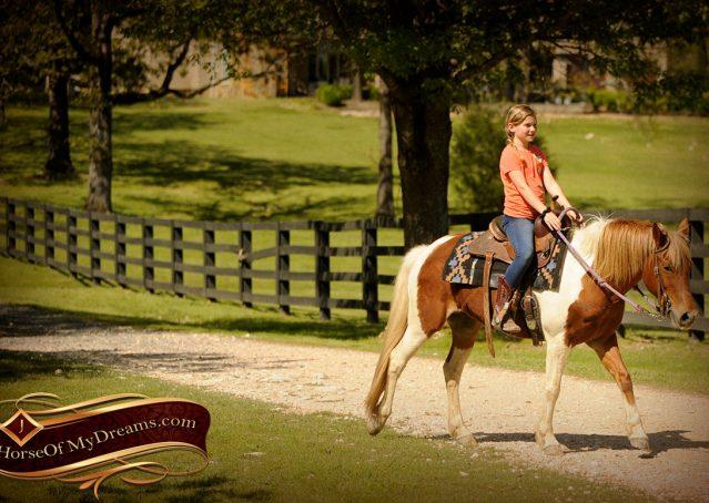 015-Sarah-Lou-Paint-Pony-Mare-For-Sale