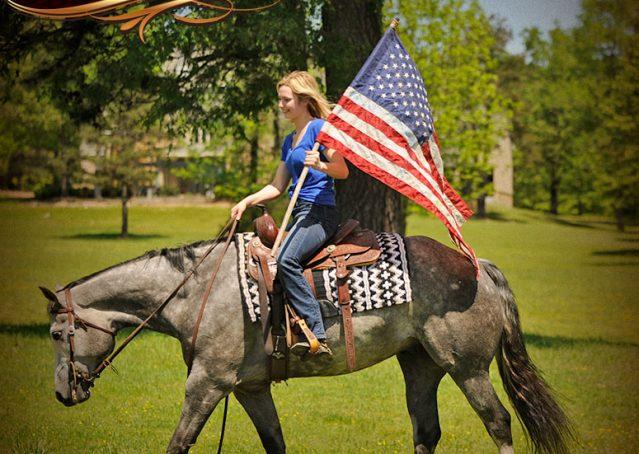 016-Berkley-Gray-Grey-AQHA-Quarter-Horse-Gelding-For-Sale