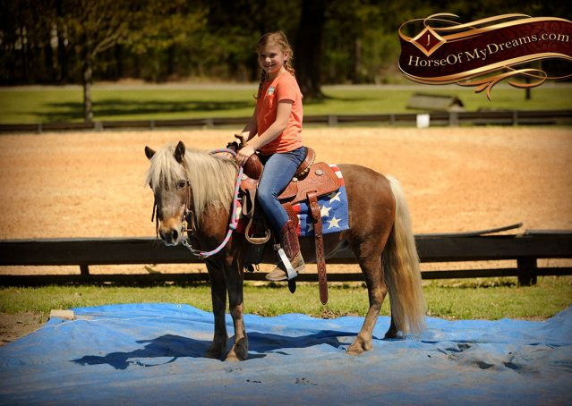 016-Peppermint-Chocolate-Palomino-kids-Pony-Mare-For-Sale