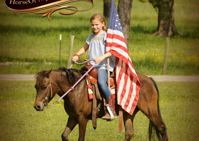 016-Punchy-Bay-Pony-Gelding-For-Sale-Kids-Bombproof