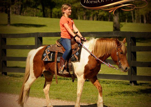 016-Sarah-Lou-Paint-Pony-Mare-For-Sale