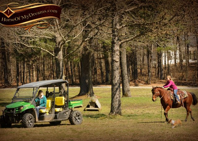 016-Wagner-Bay-AQHA-Gelding-For-Sale