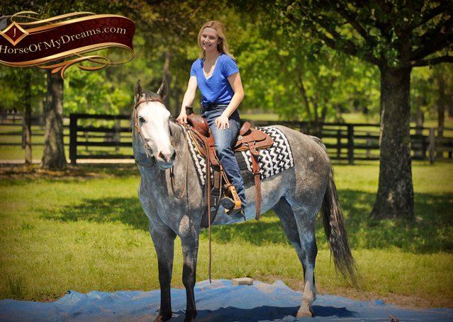 017-Berkley-Gray-Grey-AQHA-Quarter-Horse-Gelding-For-Sale
