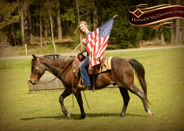 017-Jazz-Bay-Roan-AQHA-Gelding-For-Sale