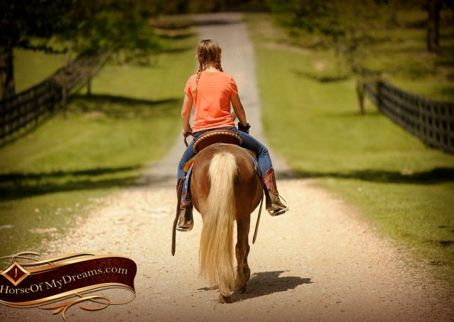 017-Peppermint-Chocolate-Palomino-kids-Pony-Mare-For-Sale