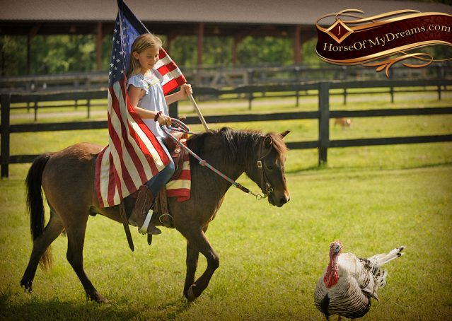 017-Punchy-Bay-Pony-Gelding-For-Sale-Kids-Bombproof