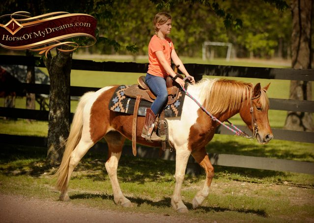 017-Sarah-Lou-Paint-Pony-Mare-For-Sale
