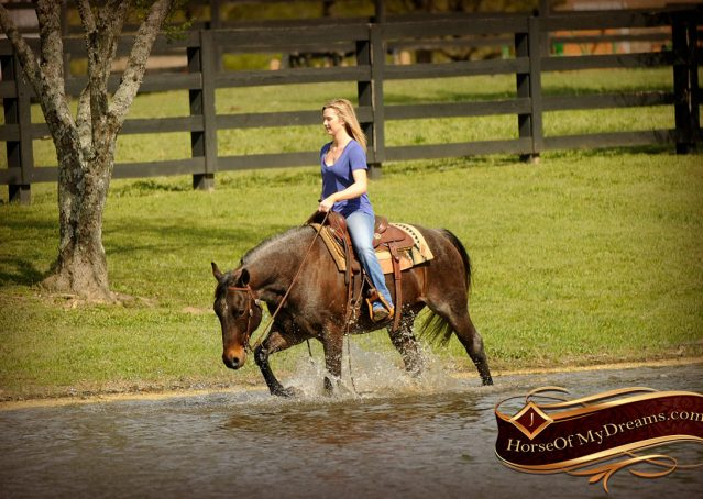 018-Jazz-Bay-Roan-AQHA-Gelding-For-Sale