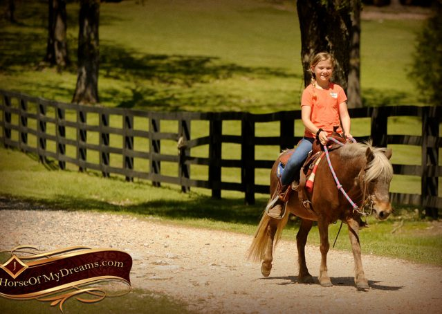 018-Peppermint-Chocolate-Palomino-kids-Pony-Mare-For-Sale