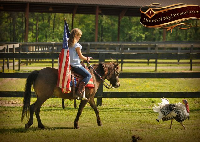 018-Punchy-Bay-Pony-Gelding-For-Sale-Kids-Bombproof