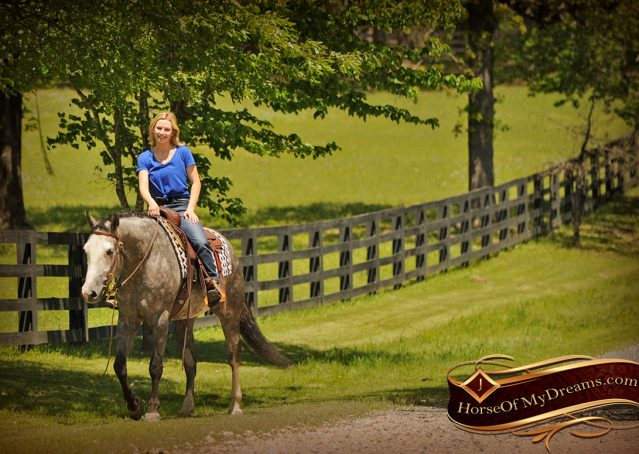 019-Berkley-Gray-Grey-AQHA-Quarter-Horse-Gelding-For-Sale