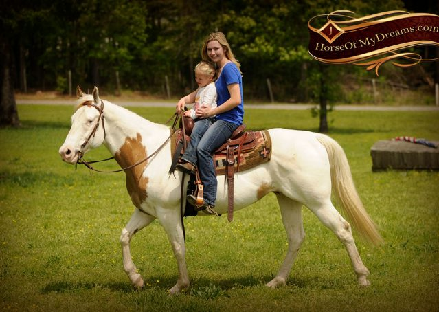 019-Dancer-APHA-Gelding-For-Sale